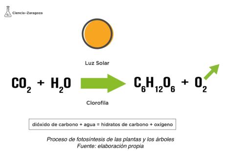 Fórmula Fotosíntesis